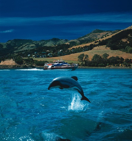 Akaroa Harbour Flight - Hector's Dolphin