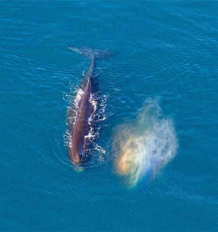 Kaikoura Whale Spotting Heli-Tour